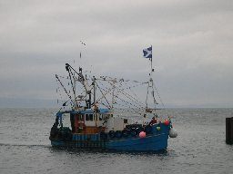 [One of the Carradale Fishing Fleet Returning to Harbour - CN6]